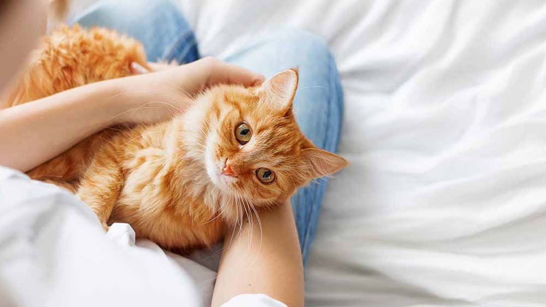 Tips About Worms In Cats